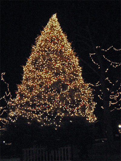 Photo Of Christmas Trees